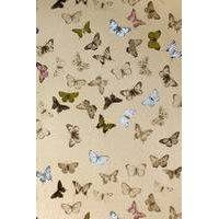 Butterfly tapetti, Mimou