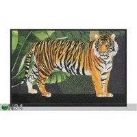 Matto Tiger 50x75 cm, Salonloewe
