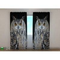 Pimennysverho Attentive Owl, Wellmira